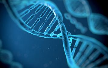 Witamina D3 reguluje ponad 1000 naszych genów budując odpodstaw zdrowie organizmu.
