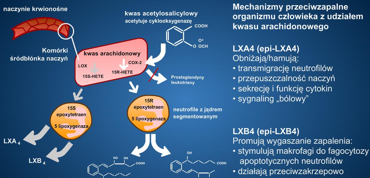 Ochronne działanie kwasów omega-3 przy stosowaniu kwasu acetylosalicylowego (aspiryny).