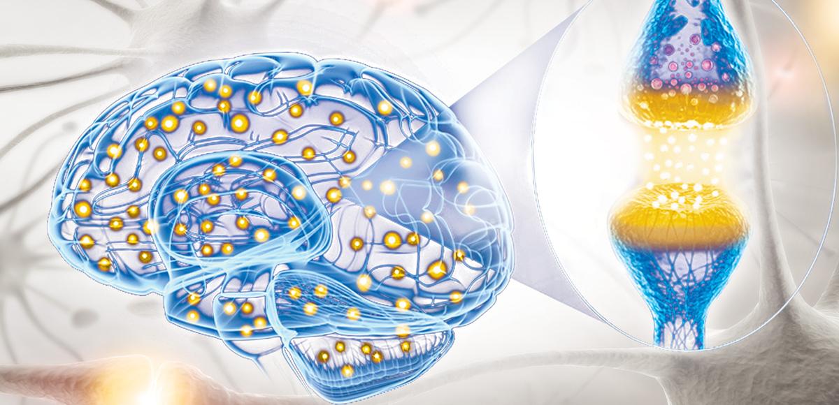 2g EPA iDHA omega-3 dziennie regeneruje system nerwowy izapobiega przedjego zniszczeniem.