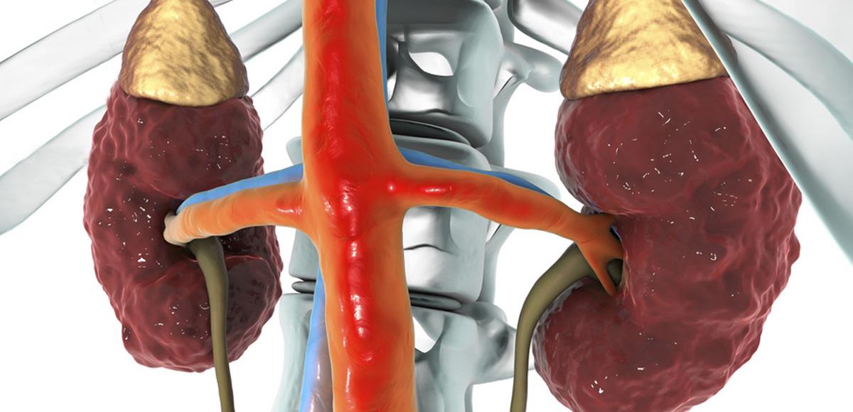 1.5g EPA iDHA omega-3 zmniejsza o23% ryzyko powstania kamieni nerkowych.