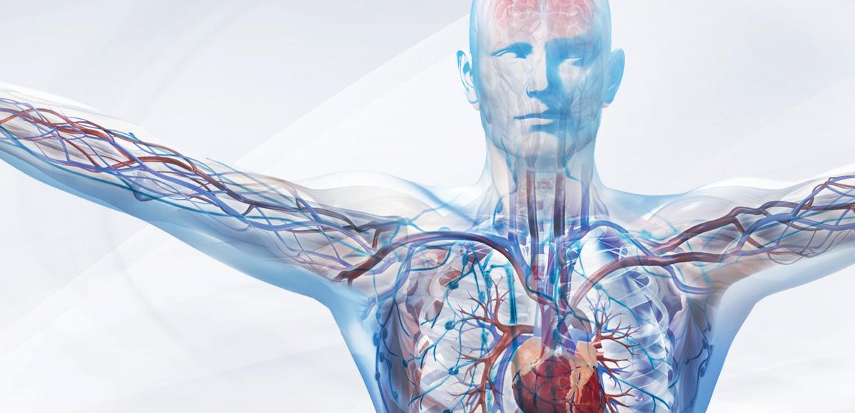 Odżywianie organizmu kwasami tłuszczowymi EPA iDHA grupy omega-3 korzystnie zmienia jego strukturę.