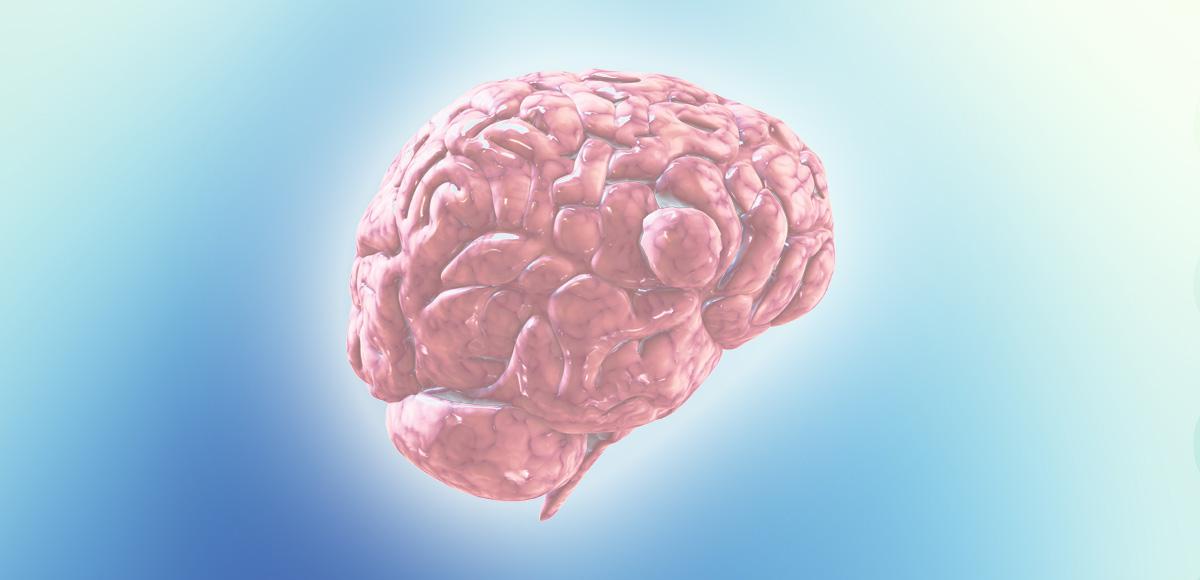 Dieta śródziemnomorska wpływa naspowolnienie procesów starzenia się mózgu człowieka.
