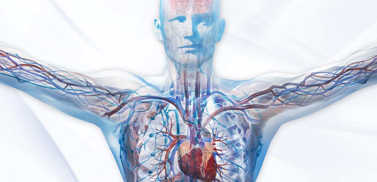 Naturalne składniki diety prawidłowo budują ipoprawiają działanie organizmu.