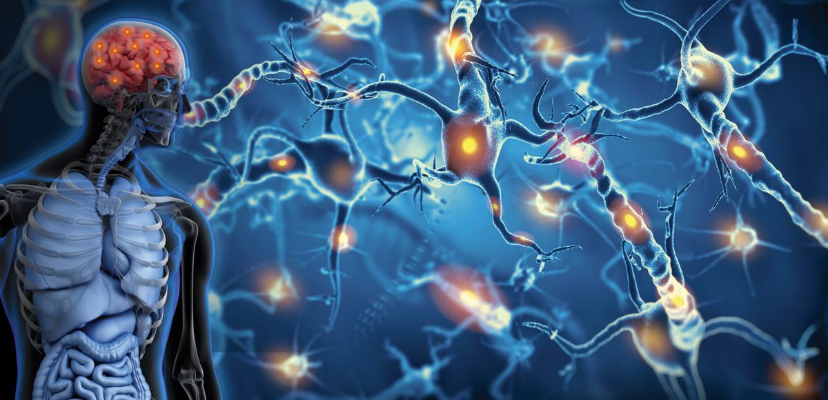 Ocena funkcji oligodendrocytów mózgu podwpływem kompozycji olejów rybich BioMarine<sup>®</sup>Medical.